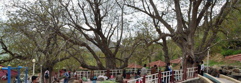 Zioh Resort